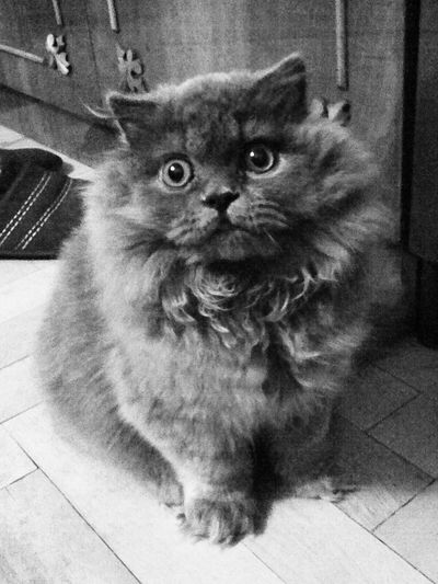 My Cat Honey:3