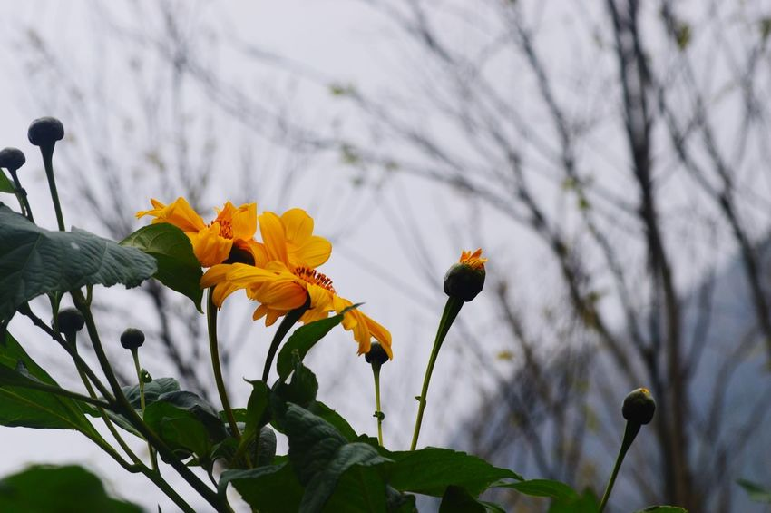 Flowers jointly Joint Flower Fragility Nature Flower Head Petal Plant Beauty In Nature Freshness Growth No People Yellow Blossom Day Outdoors Springtime Close-up Branch Tree Blooming