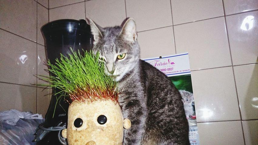 My Cat! Cat Cute Pets