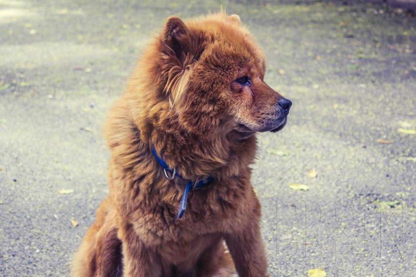 Dog Enjoying Life Bisgen EyeEm Best Shots