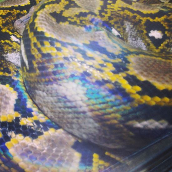 Multi Colored Abstract Full Frame Textured  Backgrounds No People Close-up Outdoors Day Water Nature Sky Snakes Snake Snakeskin