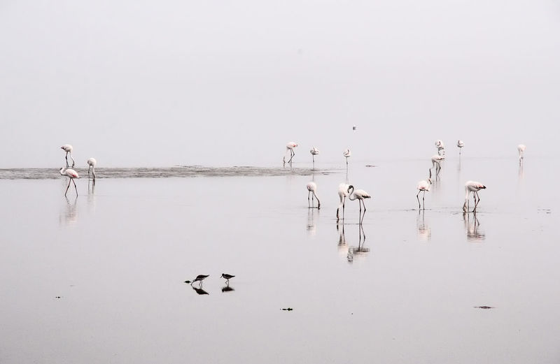 Namibia Flamingo Water Bird Animal Waterfront Animal Themes Animal Wildlife Vertebrate Lake Group Of Animals Animals In The Wild Tranquility Beauty In Nature Reflection Nature Sky Copy Space Water Bird Tranquil Scene No People Outdoors Flock Of Birds Wooden Post