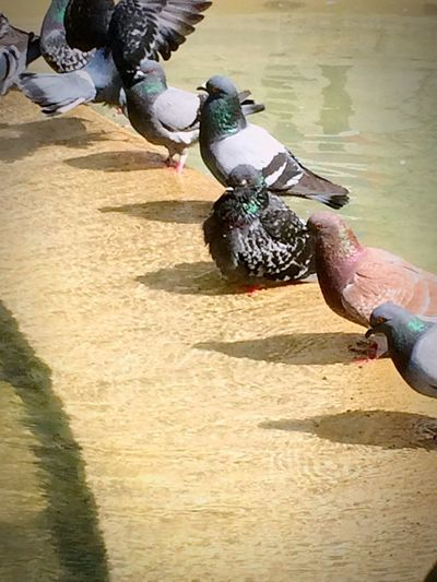 Skin color shouldn't matter, We are all the same NoToRacism Respect Bcn Pigeons taking a bath in a fountain! Everyone with different colorof flaw Sunny Day