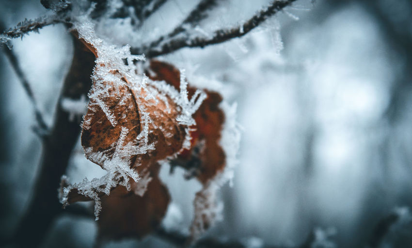 Close-up No People Nature Winter Nature Tree Snowing Forest Outdoors Scenics Snow Snowflake Cold Temperature Mood