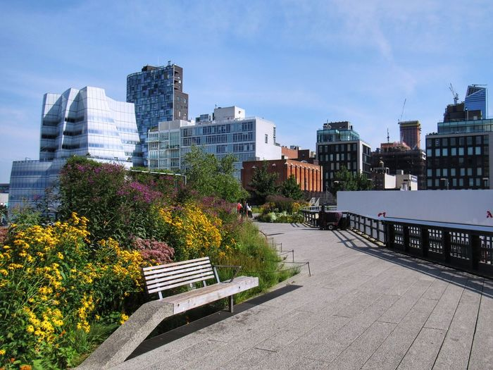 Garden in The High Line Park, NYC. Blue Sky Sunny Day Garden Flower High Line Park Manhattan New York Architecture City Building Exterior Skyscraper Cityscape Outdoors Urban Skyline Built Structure Day