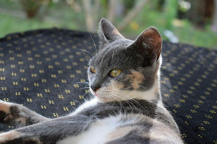 Pets Domestic Animals Pet Portraits