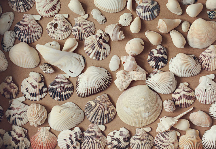 Beautiful seashell collection Abundance Arrangement Background Backgrounds Beauty In Nature Beige Tones Close-up Collection Color Tone Day Indoors  Large Group Of Objects Natural Colors Pattern Seashell Seaside Text Variety View From Above