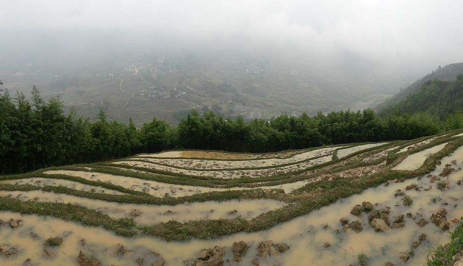 Rice Paddy Sapa Sapa, Vietnam Agriculture Beauty In Nature Day Environment Farm Field Fog Growth Idyllic Land Landscape Mountain Nature No People Outdoors Plant Scenics - Nature Terraced Field Tranquil Scene Tranquility Tree