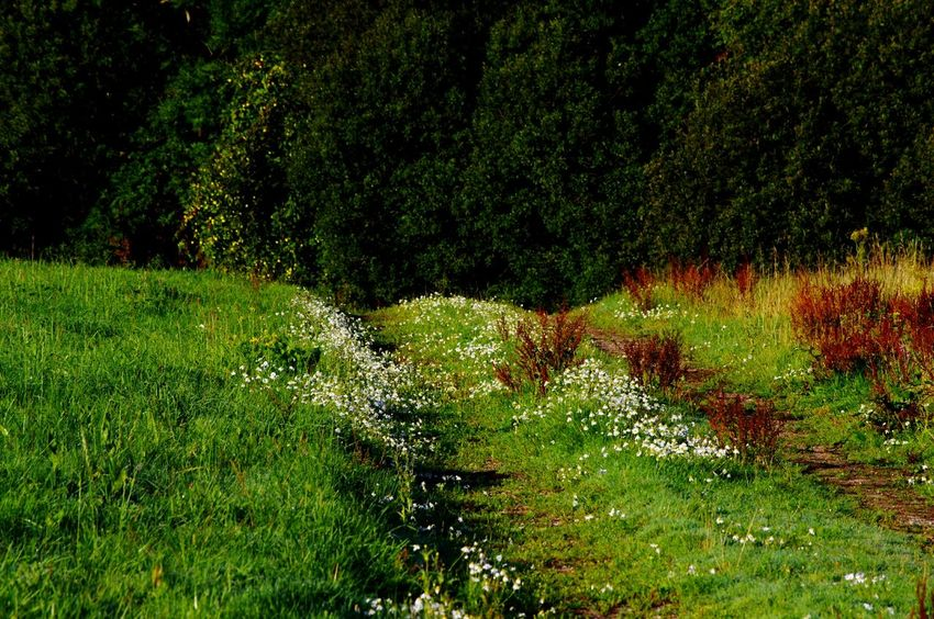 Grass Green Color Growth Nature Outdoors Field Beauty In Nature Tree Freshness Scenics Nature On Your Doorstep Flower No People Morning Sun Light