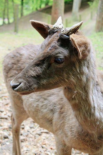 Pets Corner Nature Photography Animal Portrait Animal Photography Wildpark Schwarze Berge Wildlife Photography Deer A Closer Look
