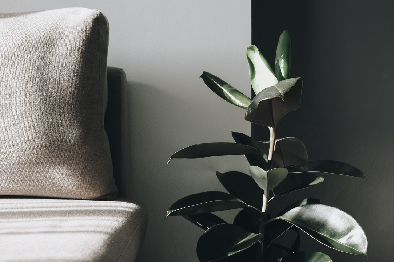 indoors, home interior, plant, nature, no people, furniture, close-up, domestic room, leaf, relaxation, potted plant, wall - building feature, plant part, sofa, growth, green color, table, still life, day, houseplant