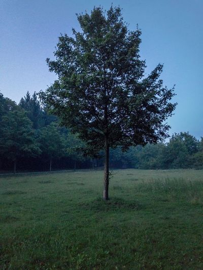 Getting dark Germany Tree Lonley Nature Tree Field Grass Tranquil Scene Tranquility Nature Landscape Beauty In Nature Clear Sky Day No People Outdoors Growth Sky Night Dark Mist Berlin Happiness Sommergefühle