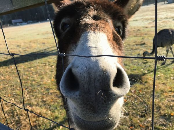 Domestic Animals One Animal No People Outdoors Cz Nature Cz Czech My Year My View Day Donkey Autumn