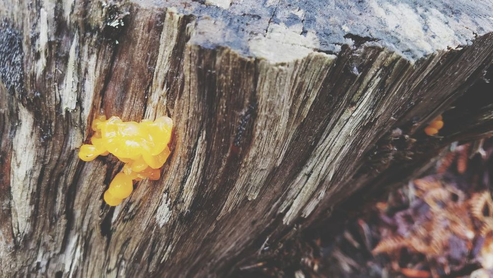 EyeEm Selects Wood - Material Damaged Close-up Destruction Bad Condition Textured  Yellow Day Outdoors No People Cold Temperature Rotting Dripping Oregonfires Forest Pdxlove Rural Scene Hidding Places Tree Trunk Tree Oregon Fires Forestfire2017