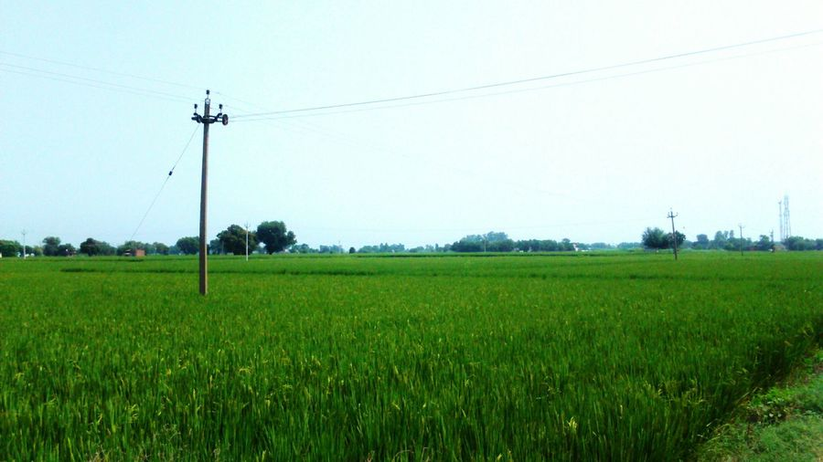Field Rural Scene Landscape Agriculture Electricity Pylon Green Color Scenics Tranquil Scene Clear Sky Beauty In Nature Blue Tranquility Nature Farm Cable Growth Power Line  Day Outdoors Crop  MY PUNJAB, MY INDIA, MY LOVE Battle Of The Cities