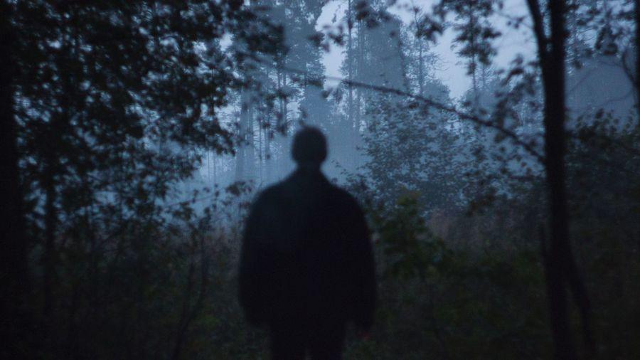Rear view of silhouette man walking on tree