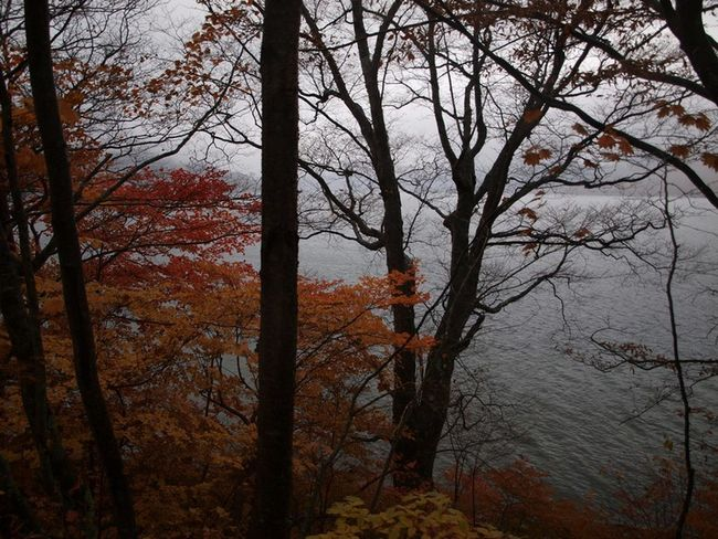 Autumn Cloudy EyeEmNewHere Japan Beauty In Nature Branch Forest Nature No People Outdoors Scenics Tranquility Tree Tree Trunk