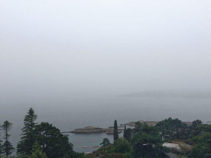 View Garnish Island Glengarriff Ireland Sea Islandlife Fog Rainy Days