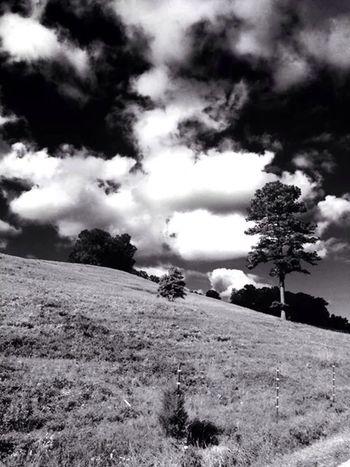 Kentucky farm. Kentucky  Tree Cloud On The Road