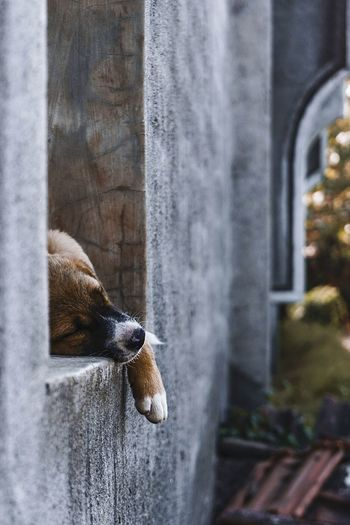 View of dog lying on window sill