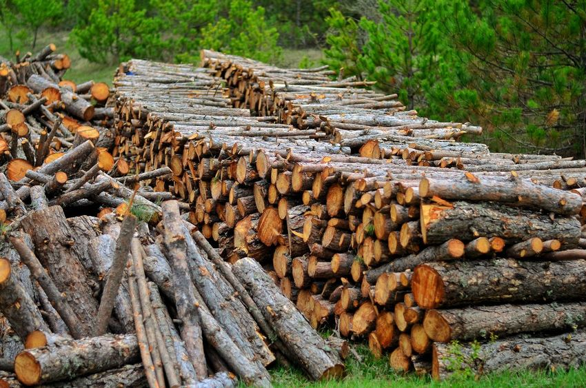 Stack Timber Abundance Log Outdoors Day Environmental Issues No People Lumber Industry Deforestation Large Group Of Objects Nature Woodpile Forestry Industry