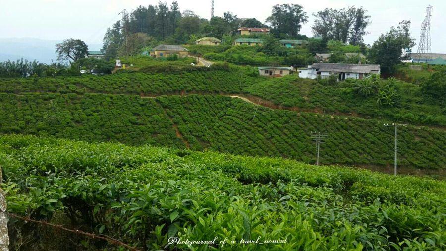 Green all around ... beautiful ... Enjoying Life Travellingwithfriends My Travel Diaries Beautiful Kerala Nature Hippys EyeEm Best Shots - Landscape Landscape_photography Tea Plantations Green Green Green!  Travel Photography