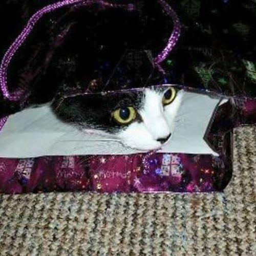 Ssshhhhhh I'm hiding Pepsi Catsofinstagram Catinabag