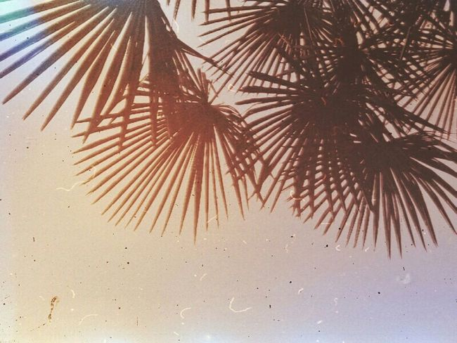 Palm Palm Trees Summertime Memories Cartolina