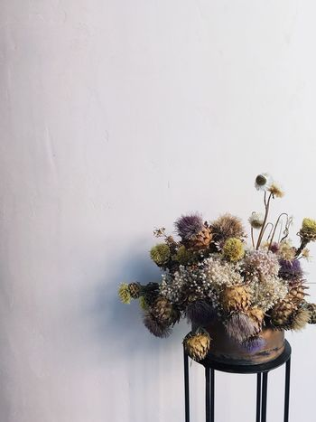 EyeEm Selects Flower Plant Beauty In Nature Rainy Days