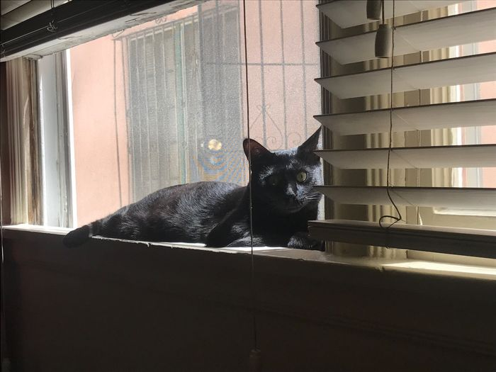 Portrait Of Black Cat Relaxing On Window
