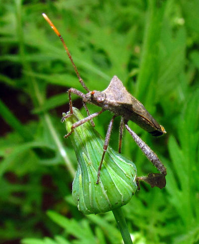 Insect Insect Photography Insects  Inseto Macro Macro Insects Macro Photography Macro_collection Macroclique Nature