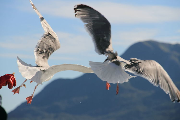 Scenic view of seagull flying mid air