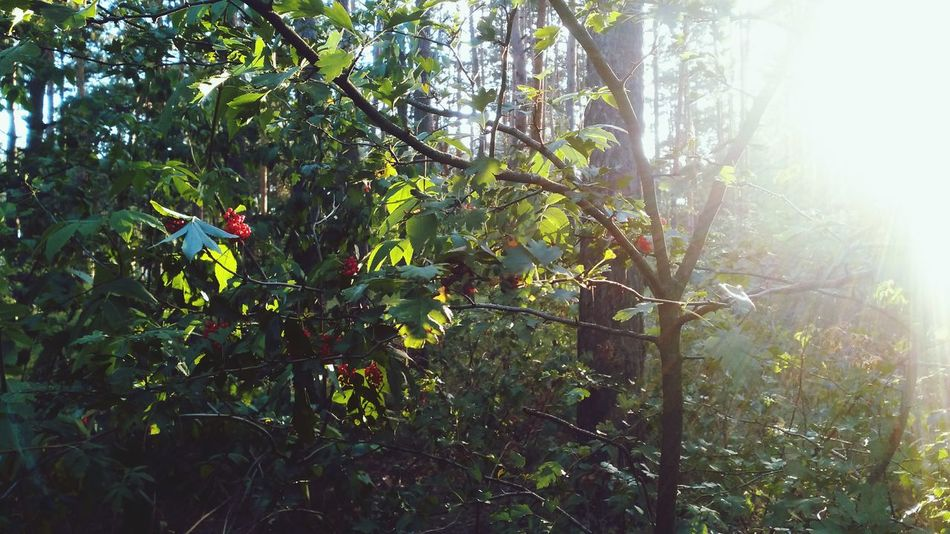 Walking Around Forest Berries Wild Light Collection Sunset EyeEm Nature Lover Nature_collection Creative Light And Shadow