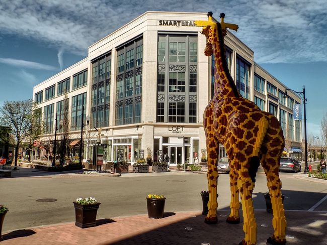 Giraffe Legophotography Midday Light And Shadow Store Clouds And Sky Blue Sky From My Point Of View Flowers Pots Windows Tree Streetcrossing Check This Out Walking Cars Outside Shopping Street Silly Forkids  Lego Sculpture Whimsical Massachusetts Adapted To The City The City Light
