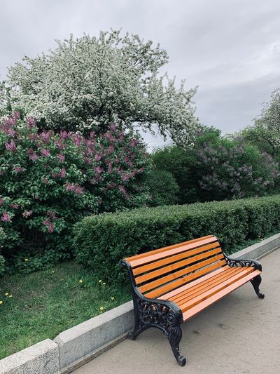 Park - Man Made Space No People Outdoors Park Nature Plant Moscow Park Gorkogo Gorky Park Park Bench Beauty In Nature Seat Bench Empty Flowering Plant Blossom Tree Blooming Tree Springtime Decadence