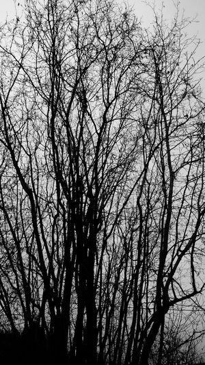Tree Blackandwhite Black And White Monochrome Silhouette Wired Wilde Still Life Nature