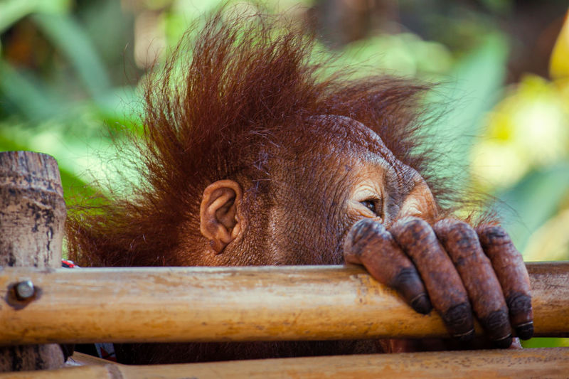 Primate Monkey