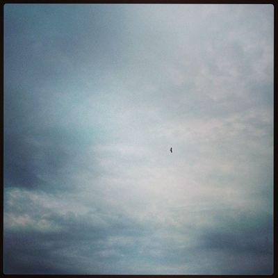 我是一只小小小小鸟 想要飞呀飞 却飞也飞不高.我寻寻觅觅寻寻觅觅一个温. - DingDang Inspiration