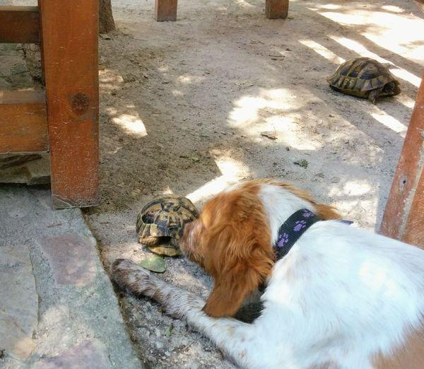 Friends Friendship Turtle 🐢 Pets Dog