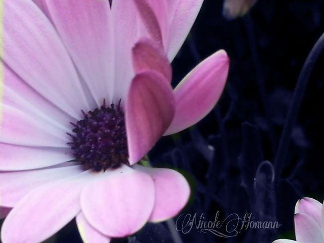 Flowers Pink Flower Nature_collection