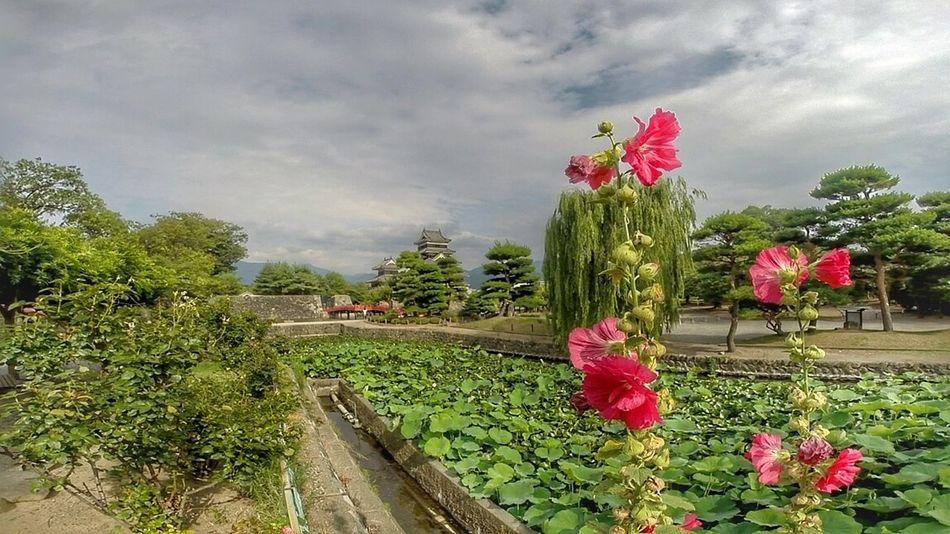 Sky Flower Plant Nature Tree Beauty In Nature Freshness Val  LG  G5se Lgg5se Japan Japan Scenery Japanese Garden Castle The Great Outdoors - 2017 EyeEm Awards