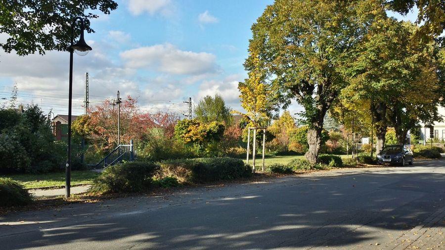 The Purist (no Edit, No Filter) Colors Of Autumn Treetastic