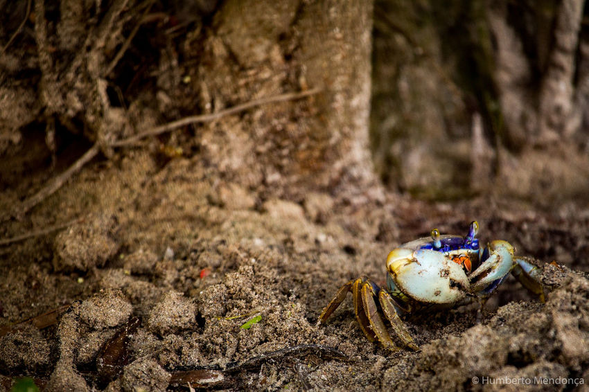 Beauty In Nature Close-up Crab Forest Ground Mangrove Nature No People Outdoors