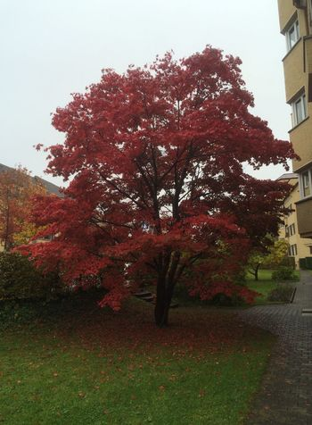 Autumn Tree Red Grass Sky Beauty In Nature Building Exterior No People Day