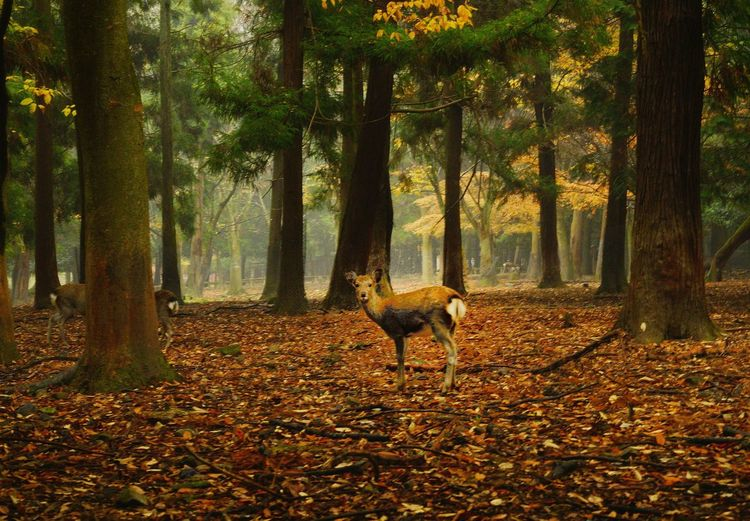 Deer in forest during autumn