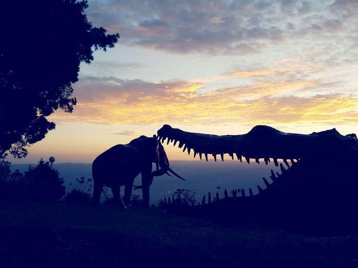 Sunset Landscape Romantic Sky Sunrise Sunrise Silhouette Elephant Elephant And Crocodile Crocodile Crocodile Silhouette Elephant Silhouette Wild Animal Silhouette Animals Animals Silhouette Silhouettes Silhouette Photography Silhouette And Sky Silhouettes Of Sunset