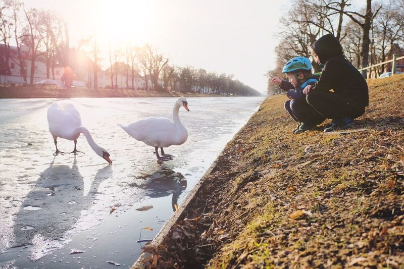 Animal Themes Sunlight Lens Flare Animal Wildlife Nature Bird Animals In The Wild Outdoors People Cold Temperature Swans Swan München Munich