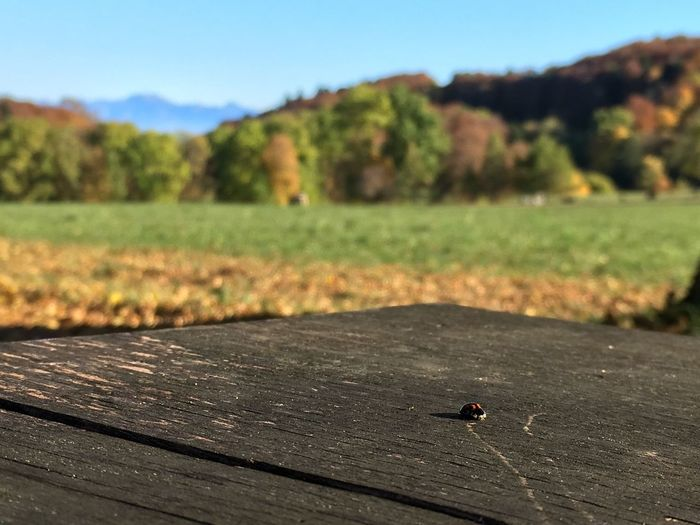 A ladybug's perspective Animal Themes Focus On Foreground Non-urban Scene Autumn Ladybird Ladybug Bench Animals In The Wild Wildlife Wildlife & Nature Animals In The Wild Wood - Material Day Insect One Animal Outdoors No People Animal Wildlife Landscape Tree Close-up