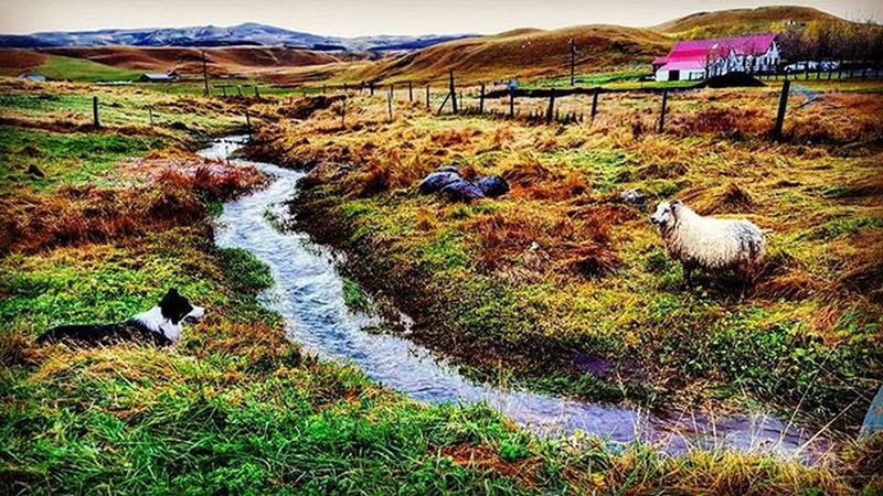 Beautiful Farm I stayed at in Southiceland :) Whyiceland