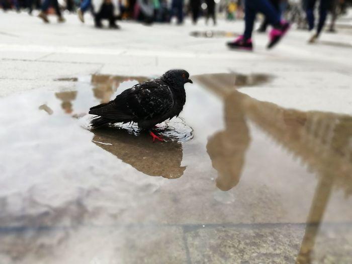 PhonePhotography Huawei Huawei Mate 10 Lite Mate 10 Lite Venice Venice, Italy Pigeon Winter Full Length Dove - Bird The Mobile Photographer - 2019 EyeEm Awards The Traveler - 2019 EyeEm Awards
